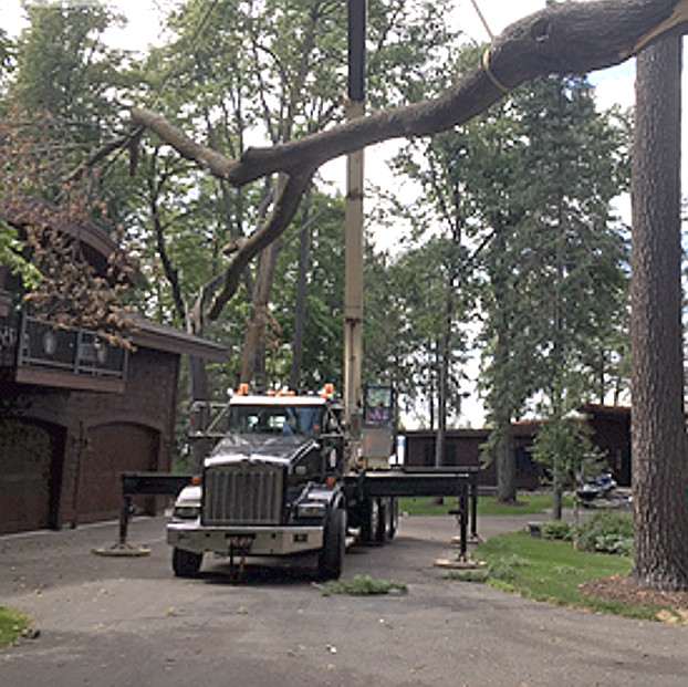 Tree Removal Brainerd
