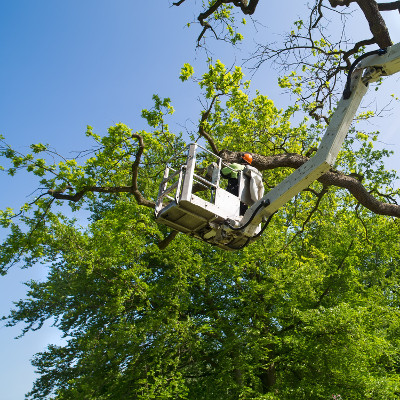 Tree Service Northern MN
